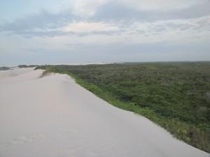 Aquí se puede apreciar la división entre el bosque y el desierto de los Lencois
