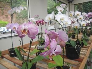 Orquídeas en Domingos Martins. las hay y excelentes en toda esta zona.
